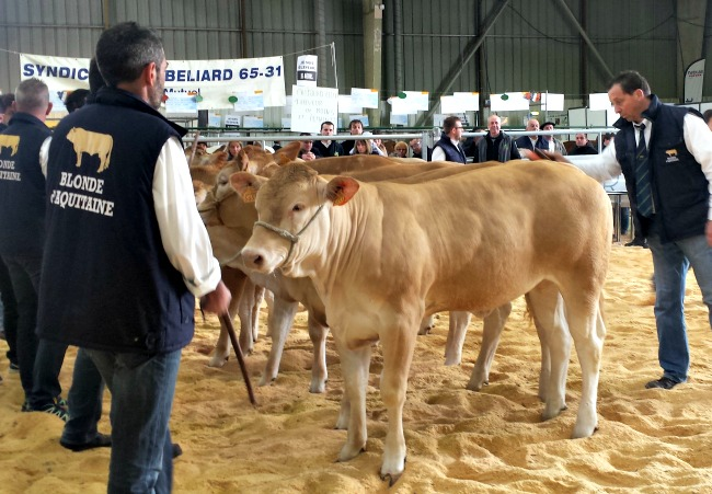 salon agricole Tarbes 2016 Tops Flops