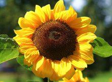 Météo Tarbes. pic de chaleur ce mardi, 33 degrés et grand soleil
