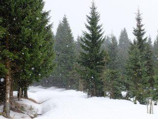 La neige tombe sur Tarbes
