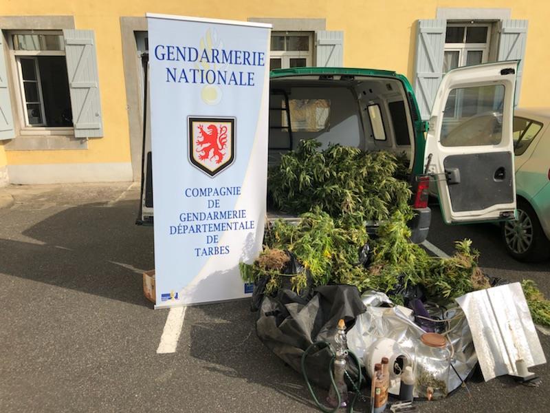 190 pieds de cannabis saisis en quelques semaines à Bazet,  Sarrouilles ou Vic