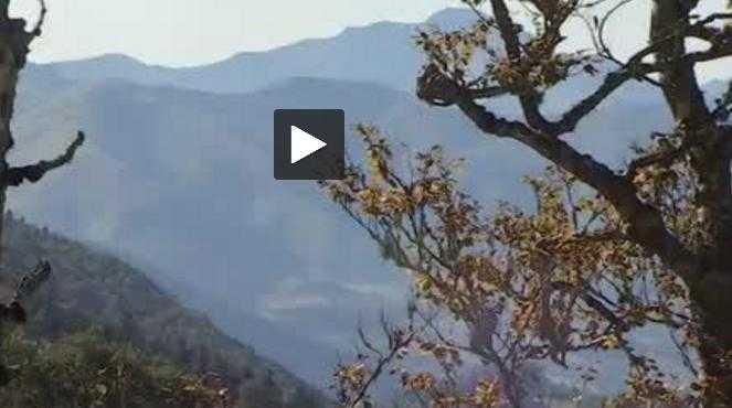 Les deux ourses introduites dans les Pyrénées attendent des petits oursons