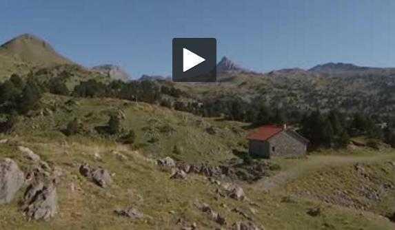 Pyrénées. le retour de l'ours inquiète certains bergers